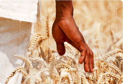 Agriculture & Big Data
